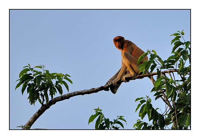 http://cp5700.free.fr/D300/malaisie_2008/DSC_0413-r.jpg