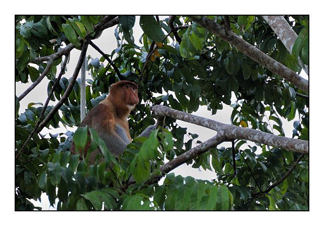 http://cp5700.free.fr/D300/malaisie_2008/DSC_0434-r.jpg