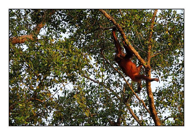http://cp5700.free.fr/D300/malaisie_2008/DSC_0518-r.jpg
