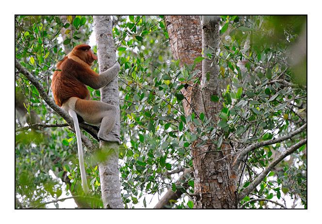 http://cp5700.free.fr/D300/malaisie_2008/DSC_0588-r.jpg