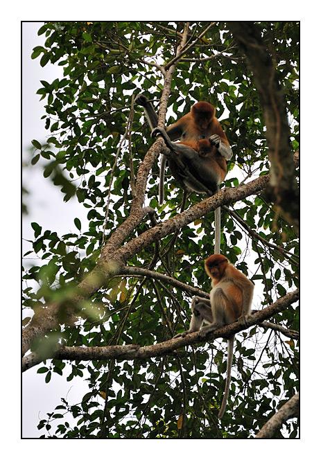 http://cp5700.free.fr/D300/malaisie_2008/DSC_0605-r.jpg