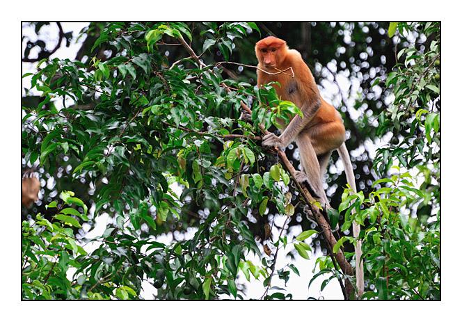 http://cp5700.free.fr/D300/malaisie_2008/DSC_0609-r.jpg
