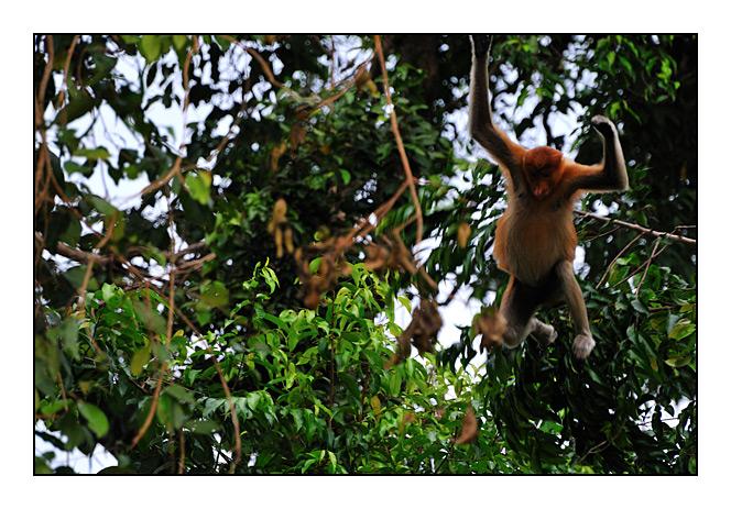 http://cp5700.free.fr/D300/malaisie_2008/DSC_0610-r.jpg