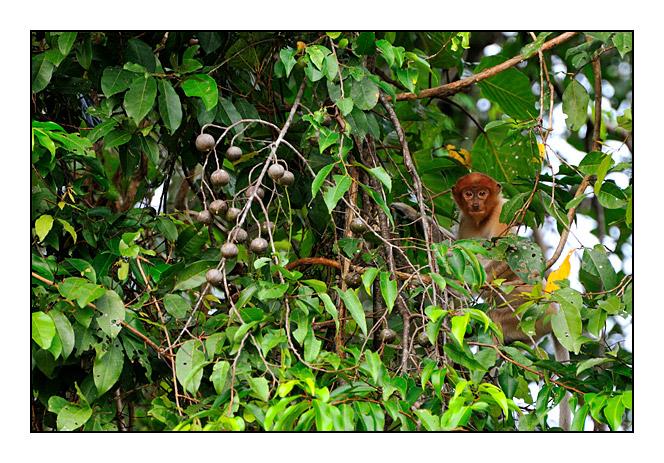 http://cp5700.free.fr/D300/malaisie_2008/DSC_0613-r.jpg