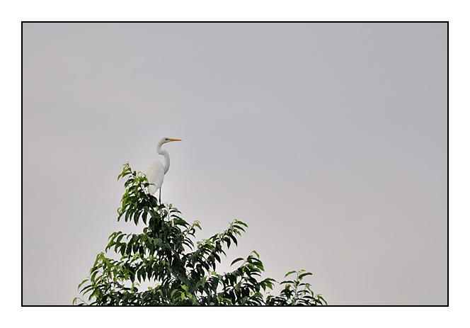http://cp5700.free.fr/D300/malaisie_2008/DSC_0621-r.jpg