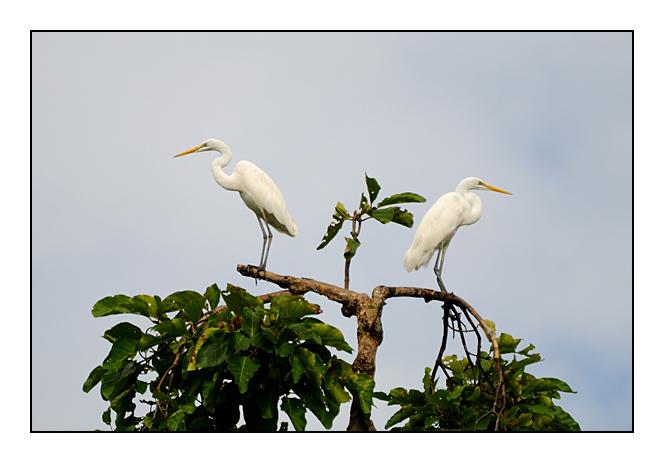 http://cp5700.free.fr/D300/malaisie_2008/DSC_0648-r.jpg