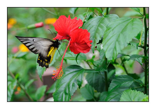 http://cp5700.free.fr/D300/malaisie_2008/DSC_0658-r.jpg