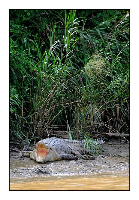 http://cp5700.free.fr/D300/malaisie_2008/DSC_0708-r.jpg