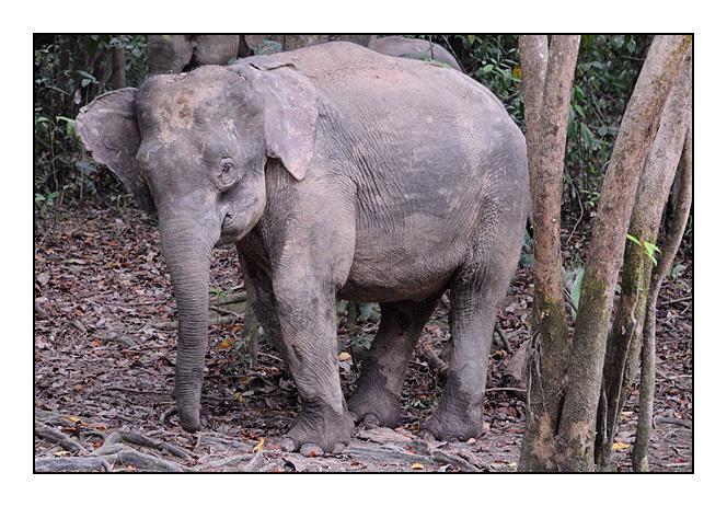 http://cp5700.free.fr/D300/malaisie_2008/DSC_0743-r.jpg