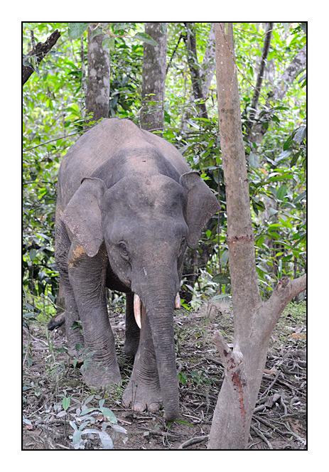 http://cp5700.free.fr/D300/malaisie_2008/DSC_0754-r.jpg