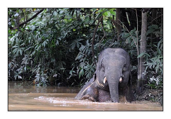 http://cp5700.free.fr/D300/malaisie_2008/DSC_0774-r.jpg