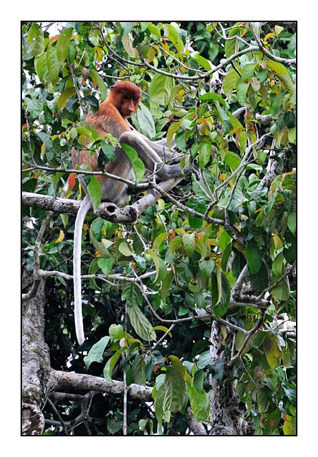http://cp5700.free.fr/D300/malaisie_2008/DSC_0856-r.jpg