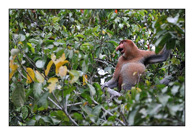 http://cp5700.free.fr/D300/malaisie_2008/DSC_0896-r.jpg