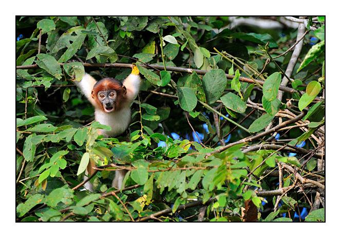 http://cp5700.free.fr/D300/malaisie_2008/DSC_0912-r.jpg