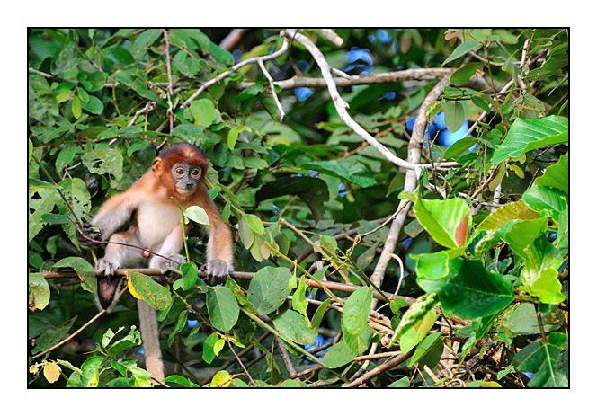 http://cp5700.free.fr/D300/malaisie_2008/DSC_0916-r.jpg
