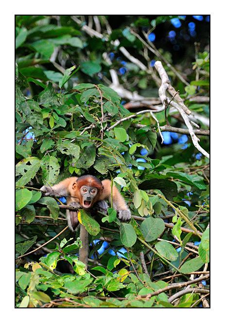 http://cp5700.free.fr/D300/malaisie_2008/DSC_0918-r.jpg