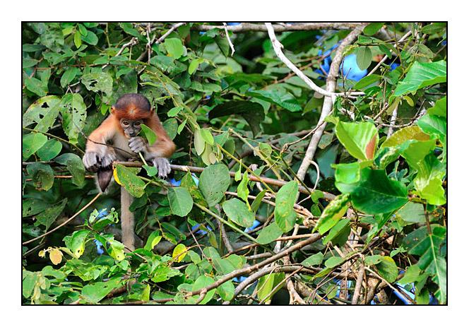 http://cp5700.free.fr/D300/malaisie_2008/DSC_0920-r.jpg