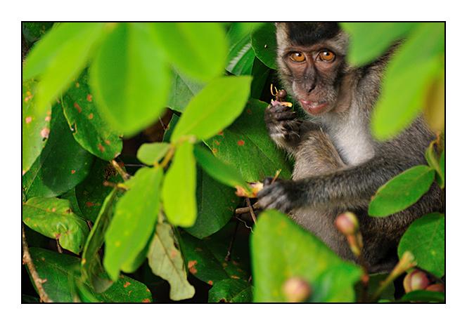 http://cp5700.free.fr/D300/malaisie_2008/DSC_0936-r.jpg