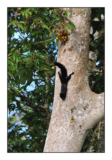 http://cp5700.free.fr/D300/malaisie_2008/DSC_0951-r.jpg