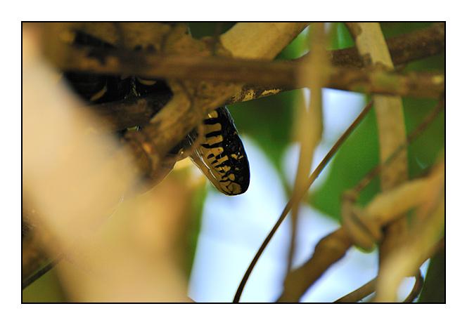 http://cp5700.free.fr/D300/malaisie_2008/DSC_0961-r.jpg