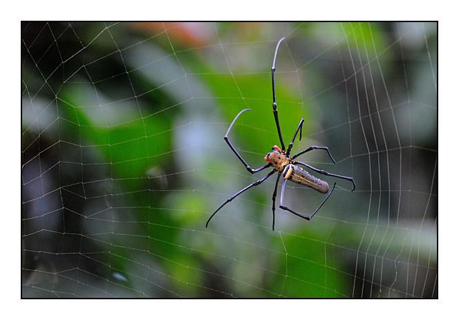http://cp5700.free.fr/D300/malaisie_2008/DSC_0983-r.jpg
