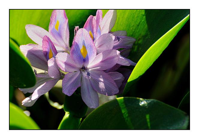 http://cp5700.free.fr/D300/malaisie_2008/DSC_1003-r.jpg
