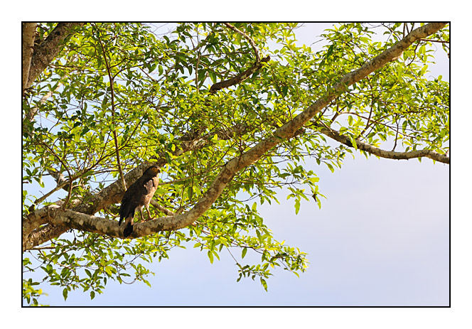 http://cp5700.free.fr/D300/malaisie_2008/DSC_1034-r.jpg