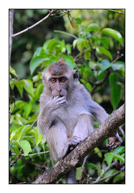 http://cp5700.free.fr/D300/malaisie_2008/DSC_1080-r.jpg