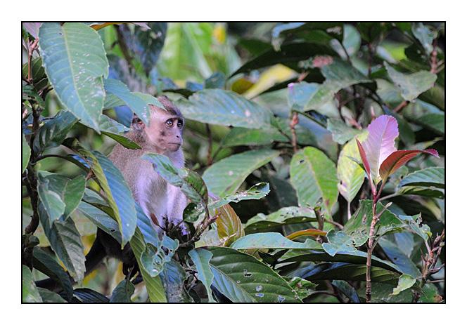 http://cp5700.free.fr/D300/malaisie_2008/DSC_1090-r.jpg