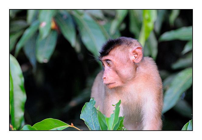 http://cp5700.free.fr/D300/malaisie_2008/DSC_1130-r.jpg