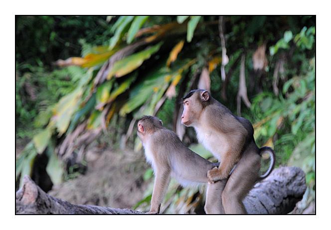 http://cp5700.free.fr/D300/malaisie_2008/DSC_1145-r.jpg